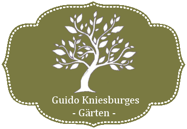 Guido Kniesburges
